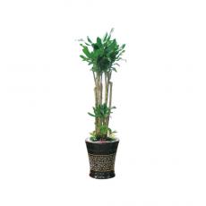 관엽식물-황금죽-40